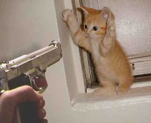 Stick 'em up, kitty!